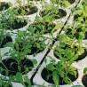 Piantine di ortaggi bio