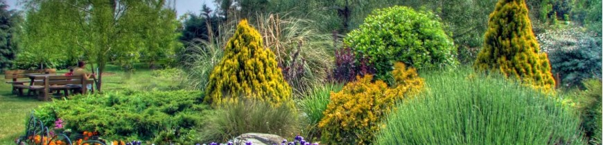 Siepi e arbusti fioriti